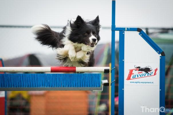 Beste hondenfoto's uit 2014