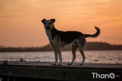 Hondenfoto van Opvanghond Rocky bij De Grote Piet