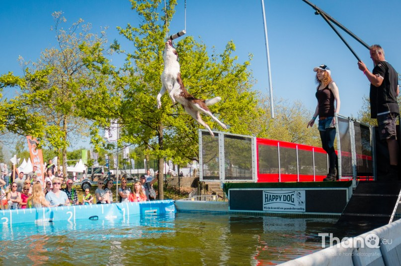 Dock Diving at Animal Event 2016