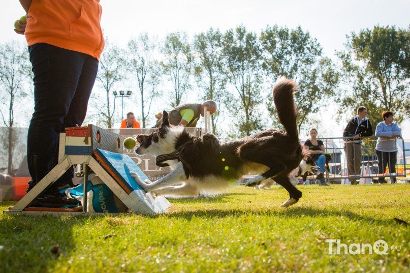Internationale Flyballwedstrijd bij KC Zeeland