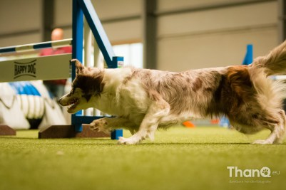 Happy Dog Wintercompetitie WW Indoor 4 All - 29 oktober 2016