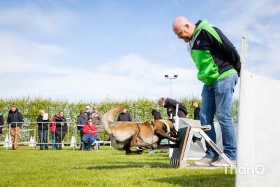 Internationale flyballwedstrijd Wilhelminadorp bij KC Zeeland