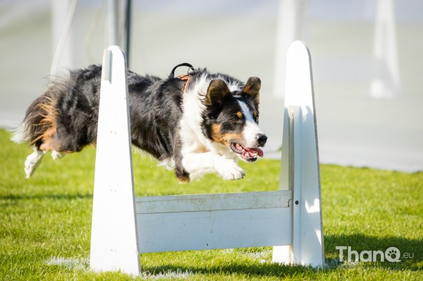 NK Flyball 2018