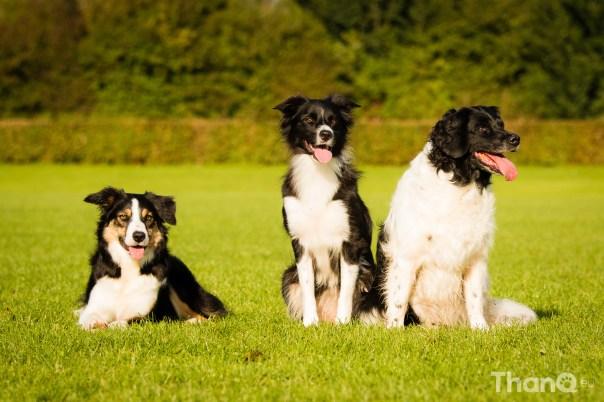 Groepsfoto met honden bij de hondenrenbaan in Goese Polder Park