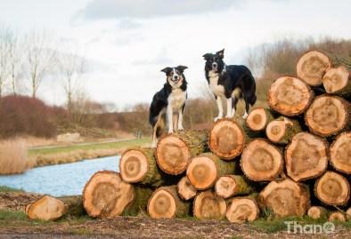 Jindi en Fenna op boomstammen in Goese Polder Park