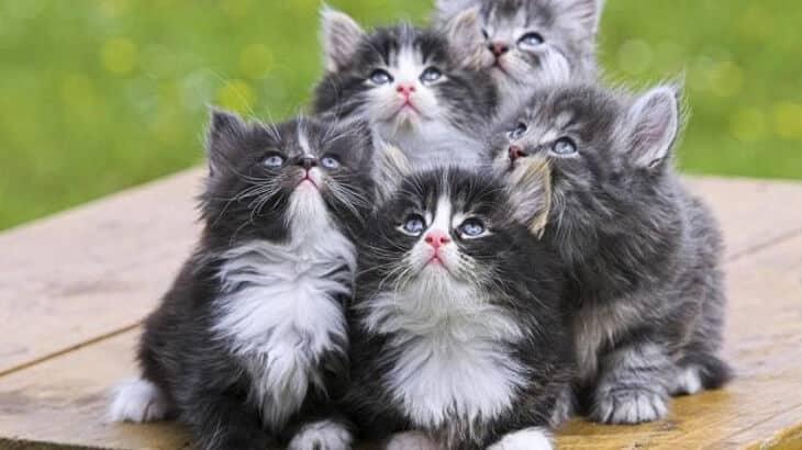 تفسير رؤية القطط في المنام ومعناه معلومة ثقافية