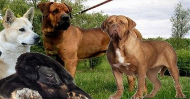 جميع انواع الكلاب واسمائهم وصورهم