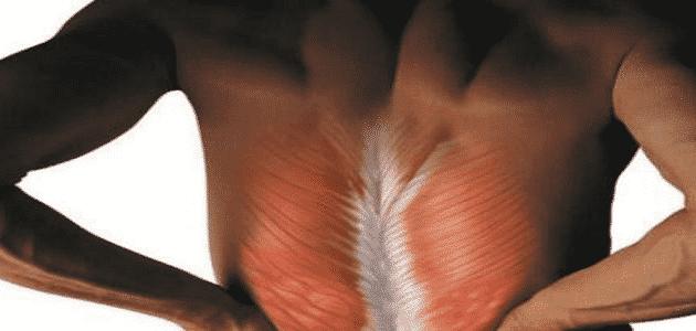ما سبب تقلص عضلات الجسم