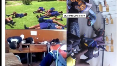 Pupils and teachers collapse and experience blackouts after seeing snakes in classrooms