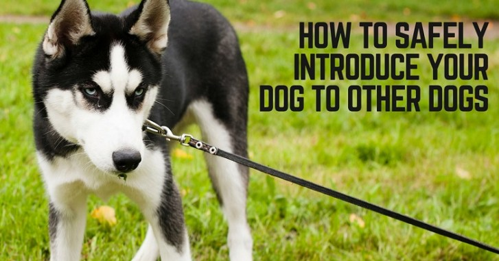 How to introduce your dog to other dogs