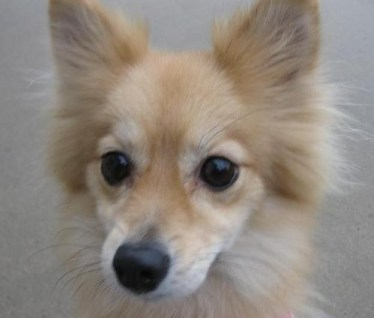 Elli the Pom mix needs lots of exercise!