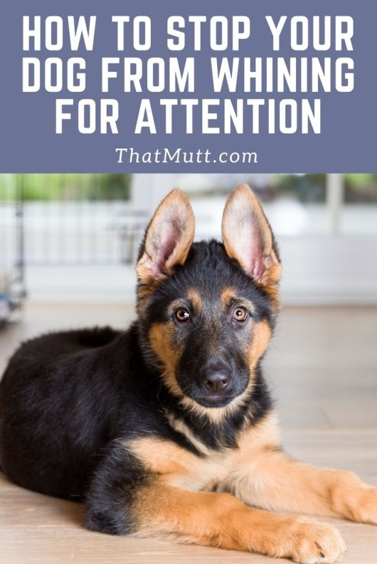 Stop a dog from crying for attention - German shepherd puppy