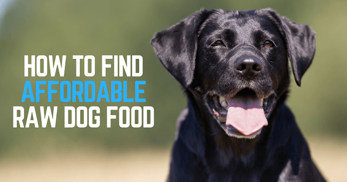 How to find affordable raw dog food