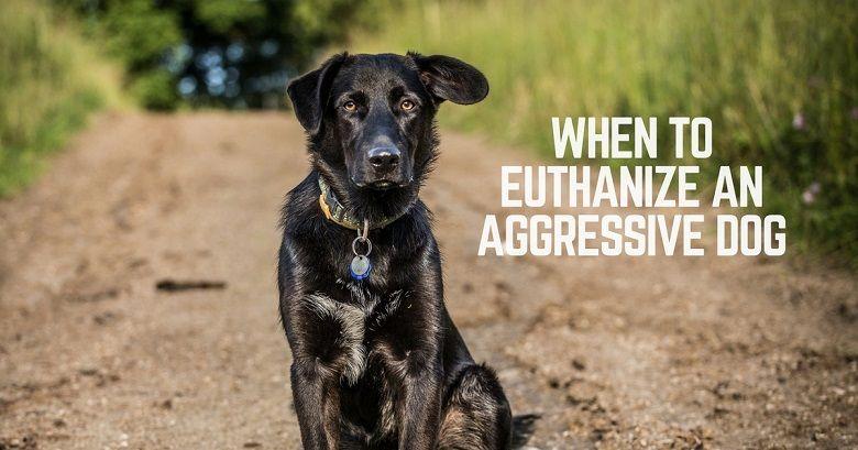 When to euthanize an aggressive dog?   ThatMutt com: A Dog Blog