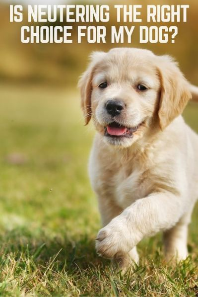 Is neutering the healthiest choice for my dog?