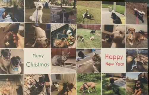 Card from pet sitter