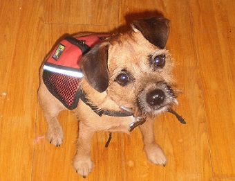 Best small dog backpack