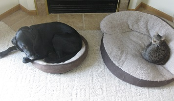 how to teach your dog to stay on his bed