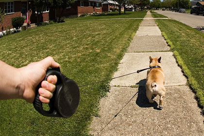 Flexi retractable dog leash