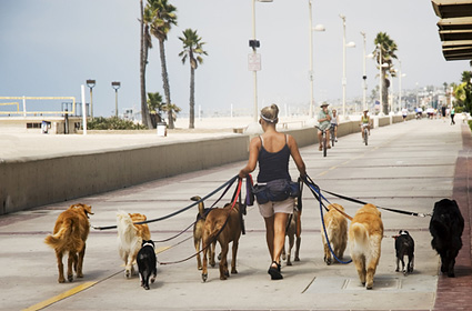 Dog walker with 10 dogs