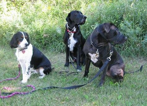 Kona, Ace and Koa