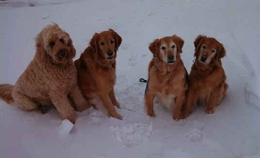 Ever wonder what to charge for pet sitting four large dogs?