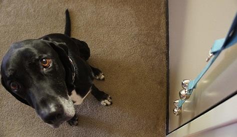 Dog doorbell from PoochieBells