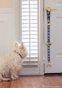 Dog with his PoochieBells dog doorbell