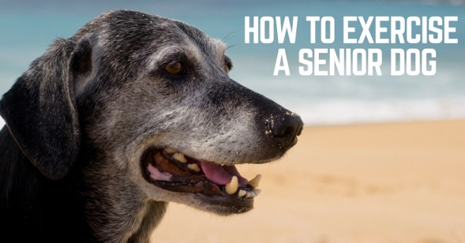 How to exercise a senior dog
