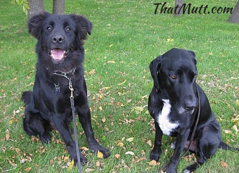 Returning a shelter or rescue dog