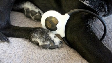 My dog Ace using the Assisi Loop 2.0