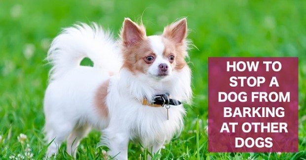 Stop a dog from barking at other dogs