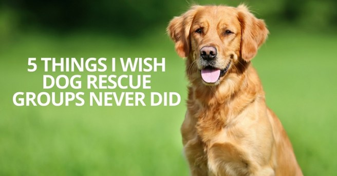 5 things I wish dog rescue groups never did
