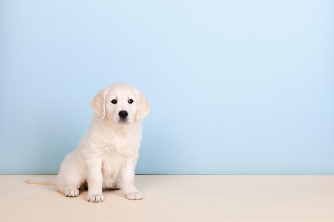 Puppy pees around the pee pad