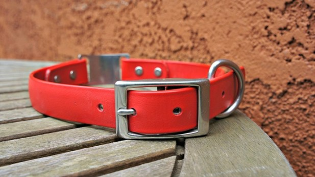 The best waterproof dog collars - dogIDs waterproof soft grip scrufftag dog collar