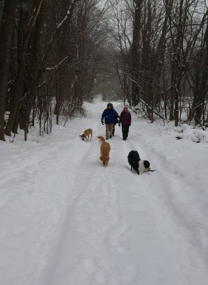 Winter off-leash hiking with dogs