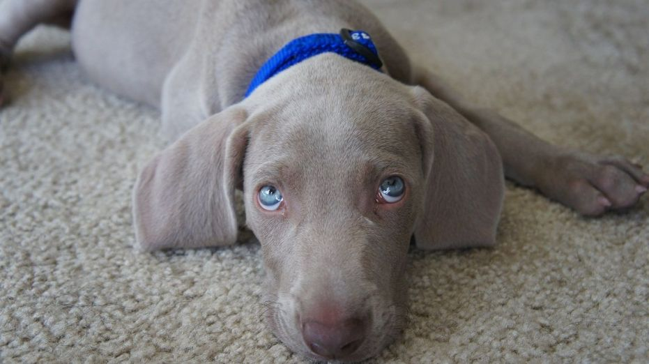 How to stop my puppy from crying at night