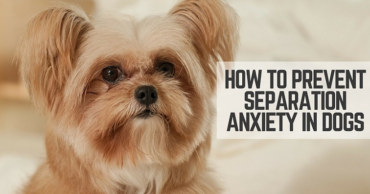 How to prevent a dog's separation anxiety