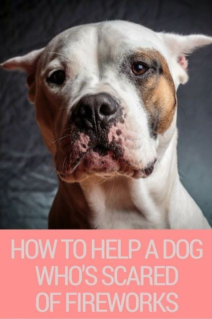 How to help a dog that is scared of fireworks