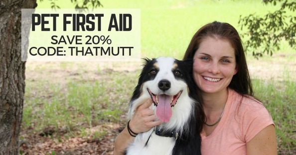 Online Pet First Aid course
