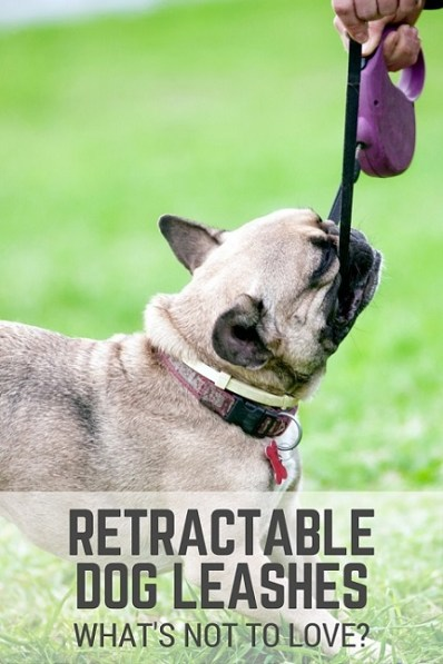 Retractable dog leashes - what's not to love
