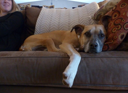 Baxter on the couch - Make your dog comfortable during a party