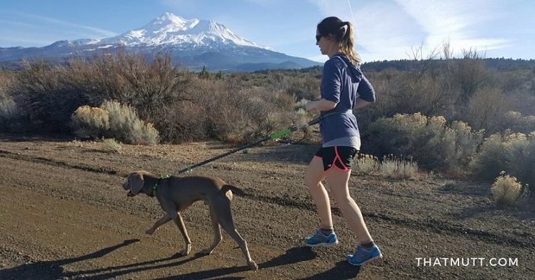 Running with my weimaraner Remy