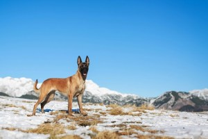 Safety Tips for Hiking with Your Dog