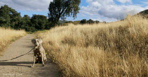 Putting in the Work: Any Dog Can Be A Good Dog