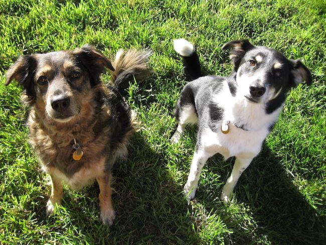 Tips for leaving your dog with a pet sitter