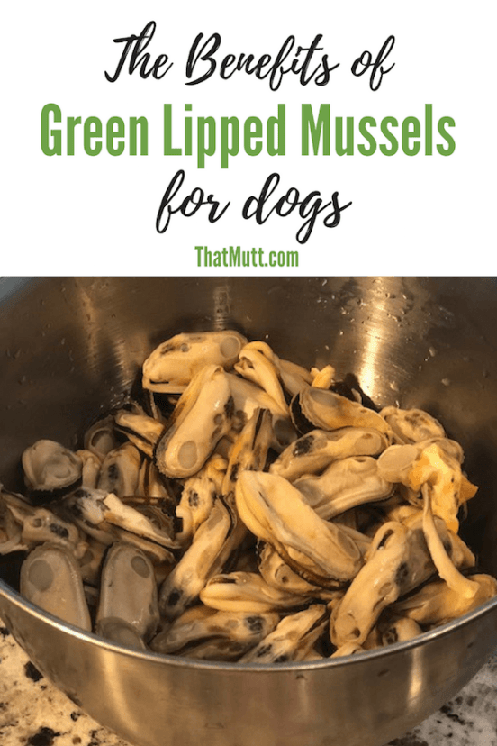 The Benefits of Green Lipped Mussels for dogs
