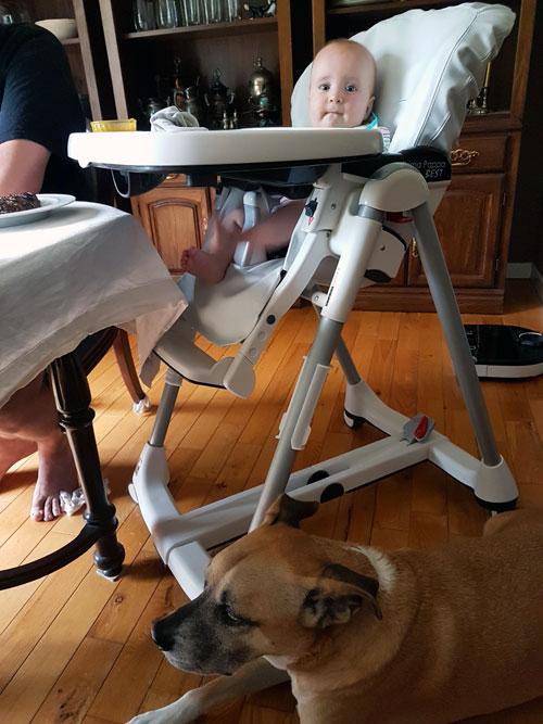 Baxter sitting under the baby's highchair