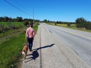 Why Consistency is Important in Dog Training