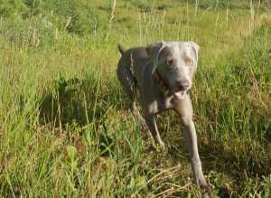 Does My Dog Need Flea Prevention in the Winter?